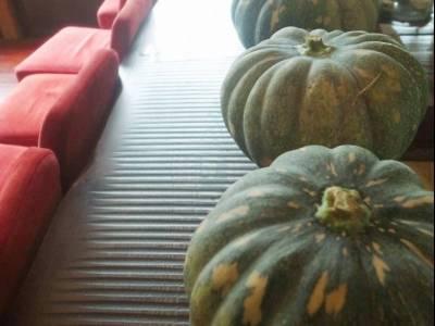 やわらやさんの体においしい暮らし④実りの秋を堪能する&かぼちゃのチーズケーキ風タルト